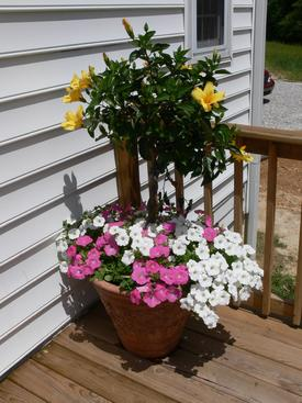 Flowers on back porch